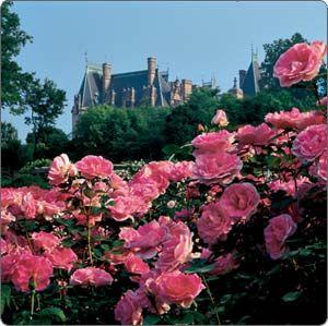 Biltmore Rose Garden Biltmore Garden Rose Collection Brings The