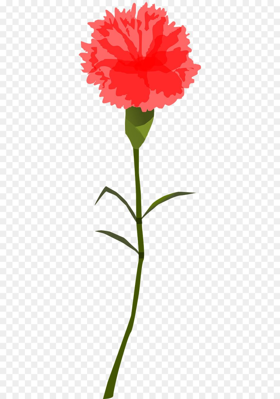 Google Image Result For Https Library Kissclipart Com 20180831 Qww Kissclipart Clip Art Clipart Carnation Clip Art Women In 2020 Carnation Flower Flowers Carnations