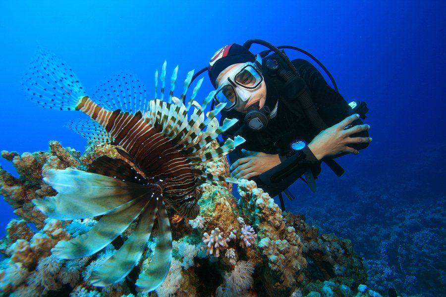 How to Become a Marine Biologist EnvironmentalScienceorg Future - marine biologist job description