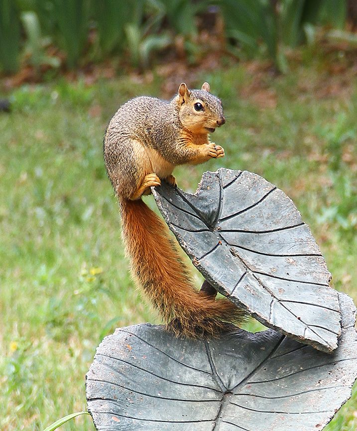 We have plenty of fat, happy squirrels in our neighborhood. I don't mind them until they dig up my plants.