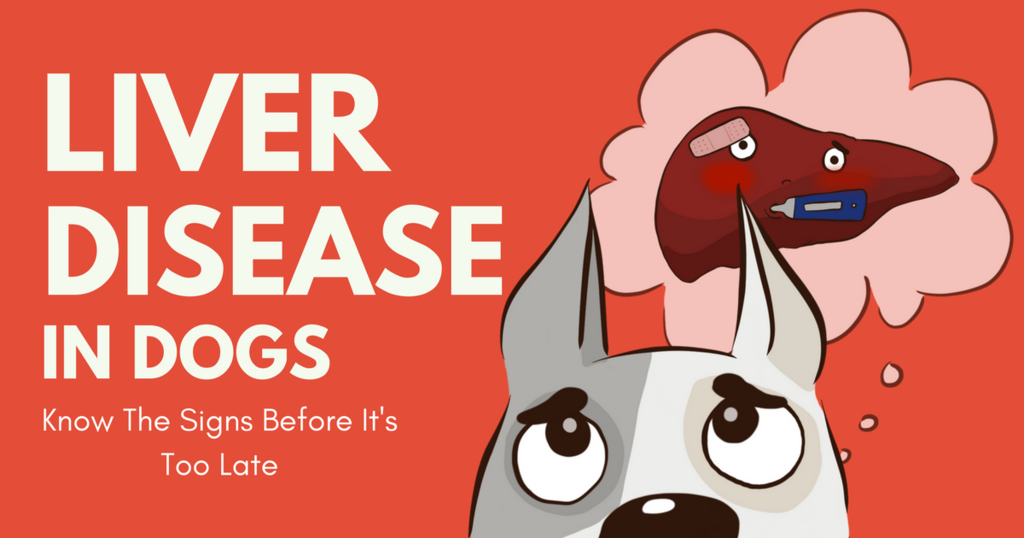 Liver Disease in Dogs: Know The Signs Before It's Too Late   Liver disease, Liver  disease diet, Liver failure symptoms