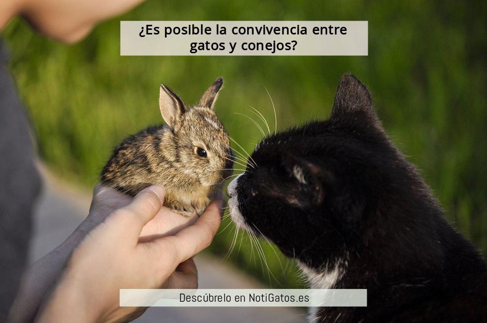 Gatos Y Conejos Pueden Llevarse Bien Gatos Conejos Animales