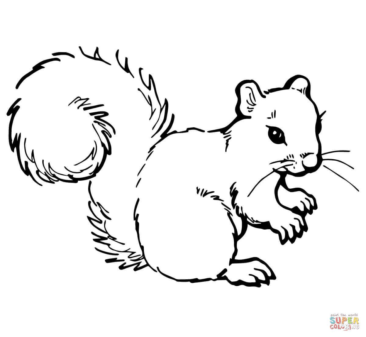 Grey Squirrel Coloring Page From Squirrels Category Select From