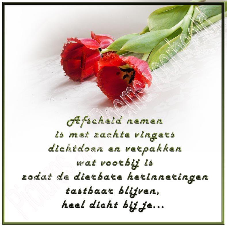Citaten Met Afscheid : Foto afscheid nemen bloemen blijven mooi vooral