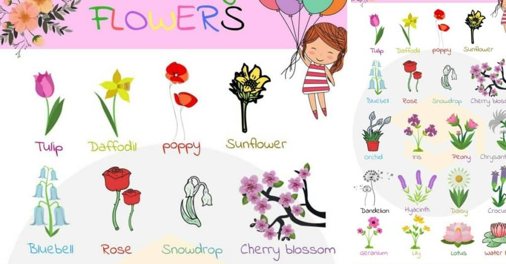 Flowers Names Useful List Of Flowers With Images 7 E S L In 2020 List Of Flowers Friendship Flowers Flower Photos
