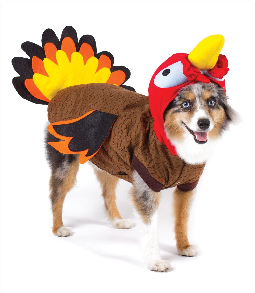 Aussie Dressed As Turkey Dog Turkey Costume Small Dog Costumes