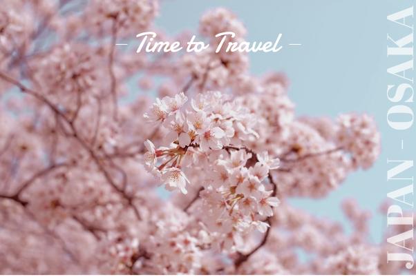 Travel Greeting Card Cherry Blossom Wallpaper Sakura Flower Cherry Blossom