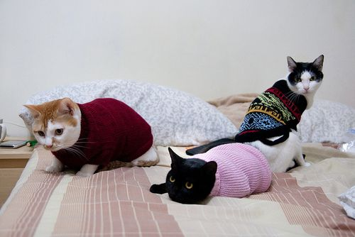 These aren't bears but I don't care. It's a cat sweater party.