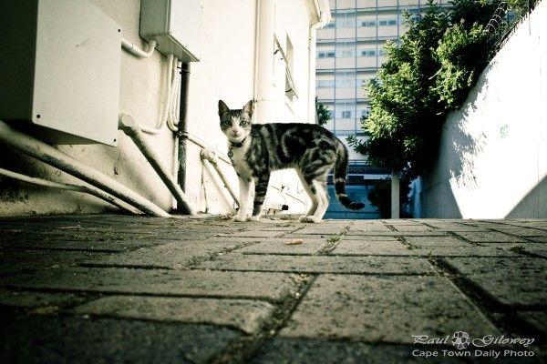 Startled kitty-cat