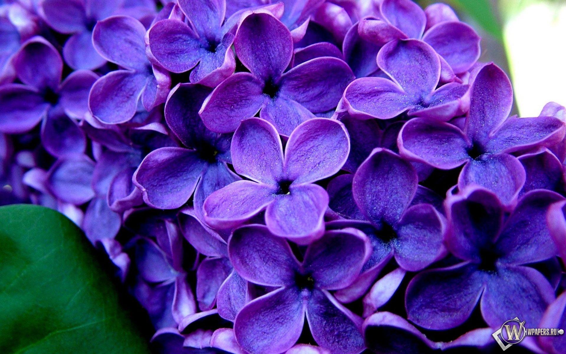 Imagenes De Flores Moradas Para Fondo De Pantalla En 3d 1 Hd