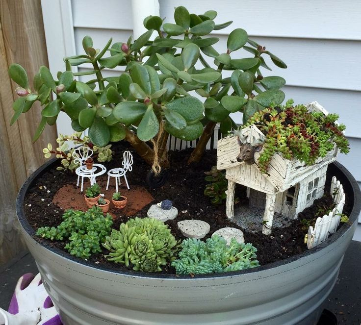 Fairy garden with jade and miniature house fairy garden for Fairy garden box ideas
