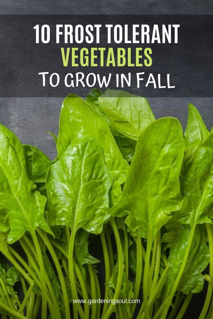 10 Frost Tolerant Vegetables To Grow In Fall Growing 400 x 300