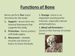 Image result for Basic bone function slide