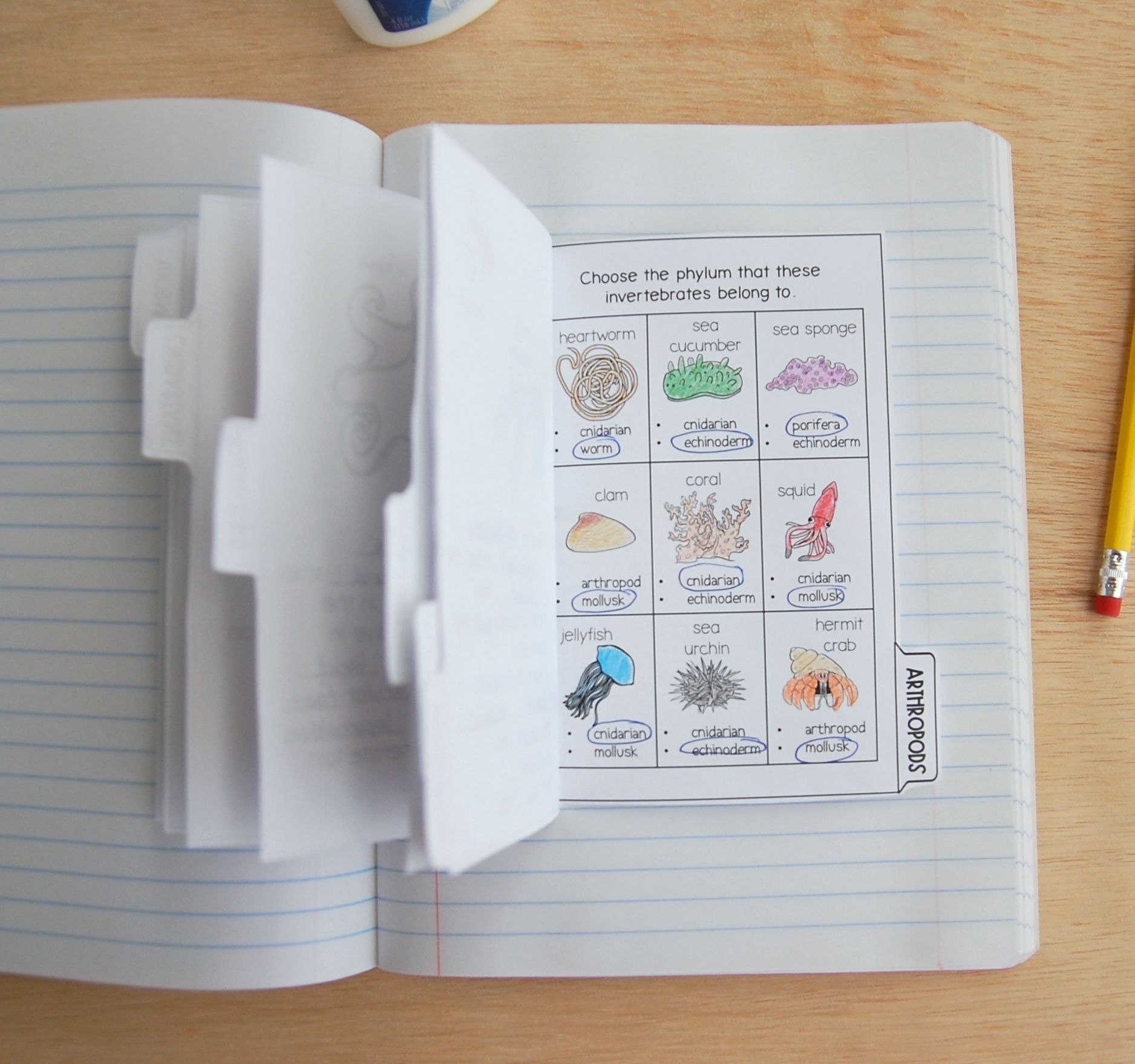 Vertebrates Amp Invertebrates Interactive Notebook