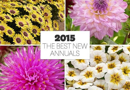 Annual Plant Pairings Top Annual Plant PairingsTop Annual Plant Pairings
