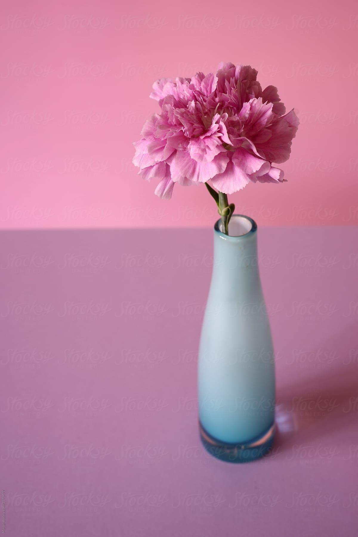 Pink Carnation In Blue Vase By Marcel Flower Vase Stocksy United In 2020 Pink Carnations Blue Vase Carnations