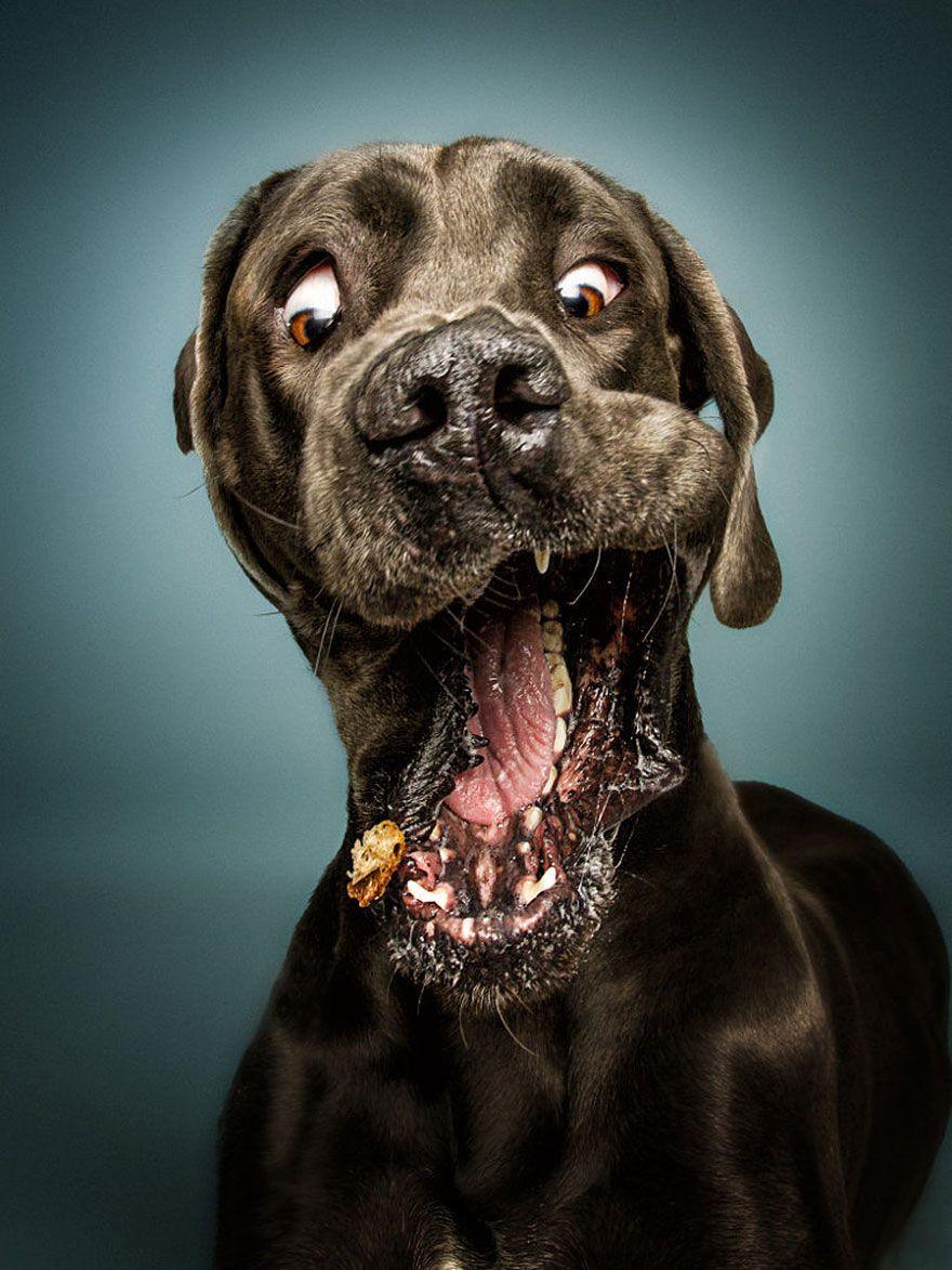 Quiso fotografiar a varios perros mientras les lanzaba su comida favorita y el resultado no puede ser más divertido