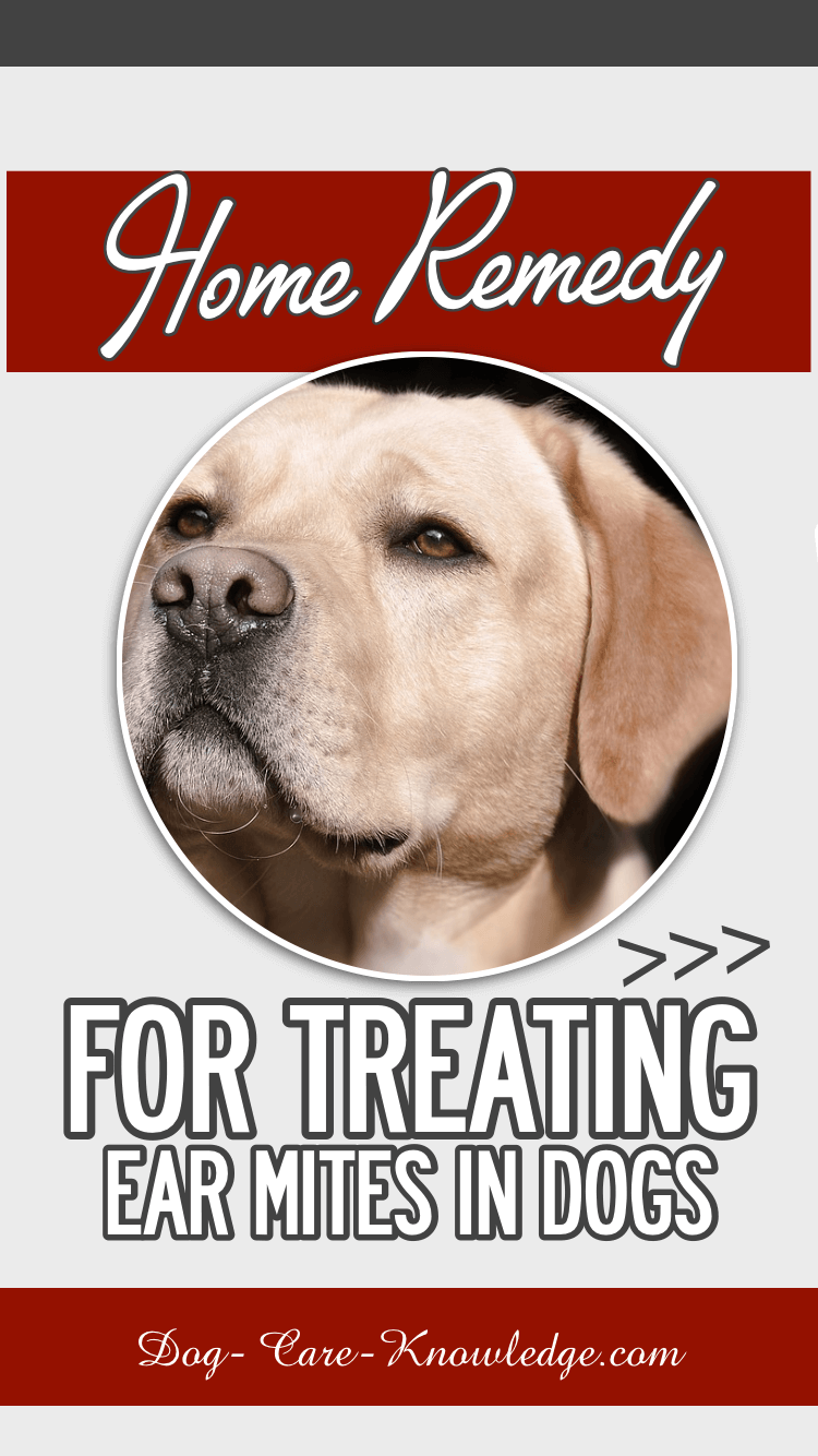 Ear Mites In Dogs Big Problems Guaranteed Solution With