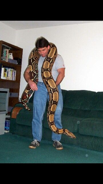 Red tail boa adult   Animals ♥   Red tail boa, Boa snake