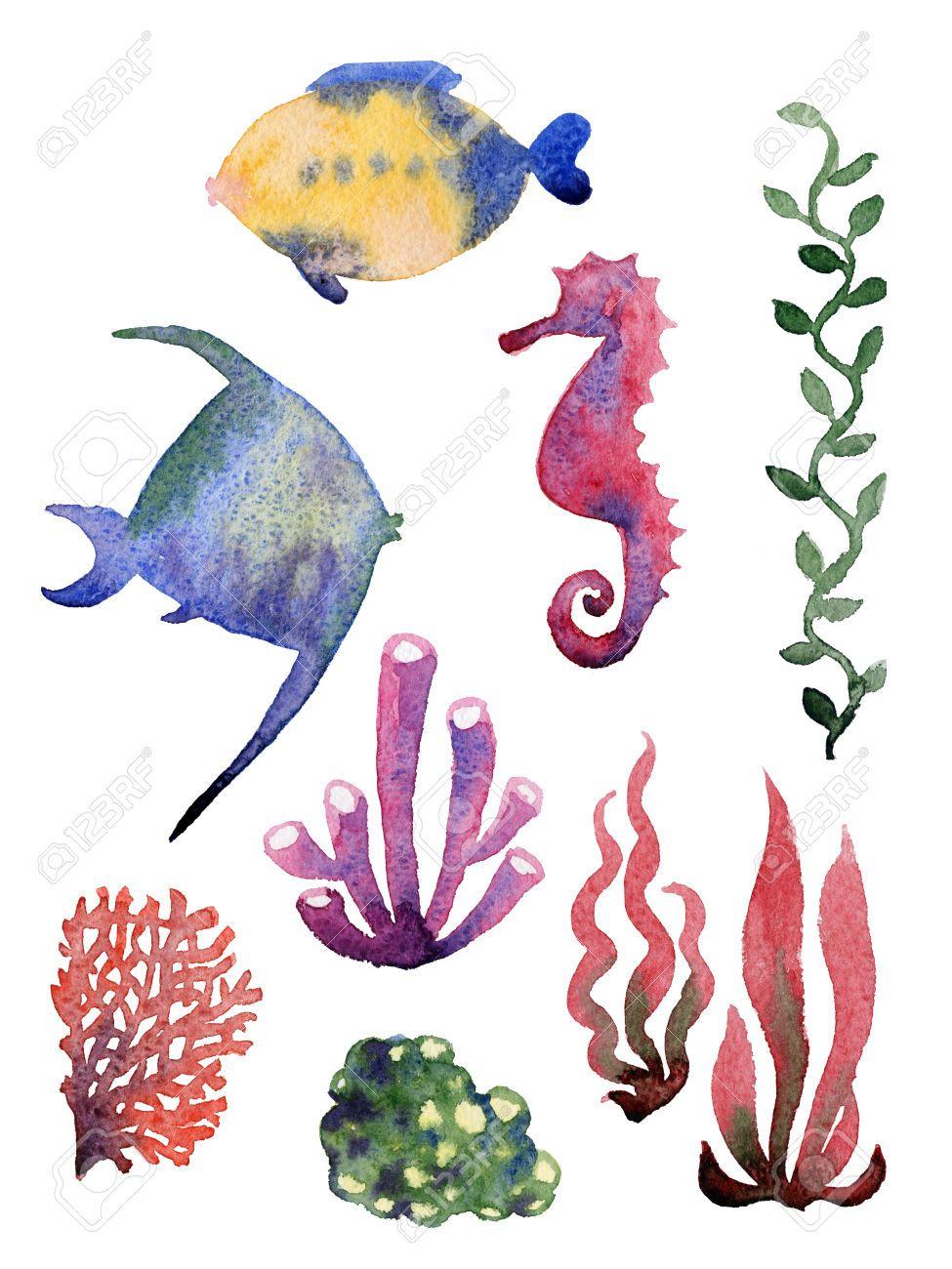 Satz von verschiedenen Muscheln, Korallen und Seesterne. Aquarell ...
