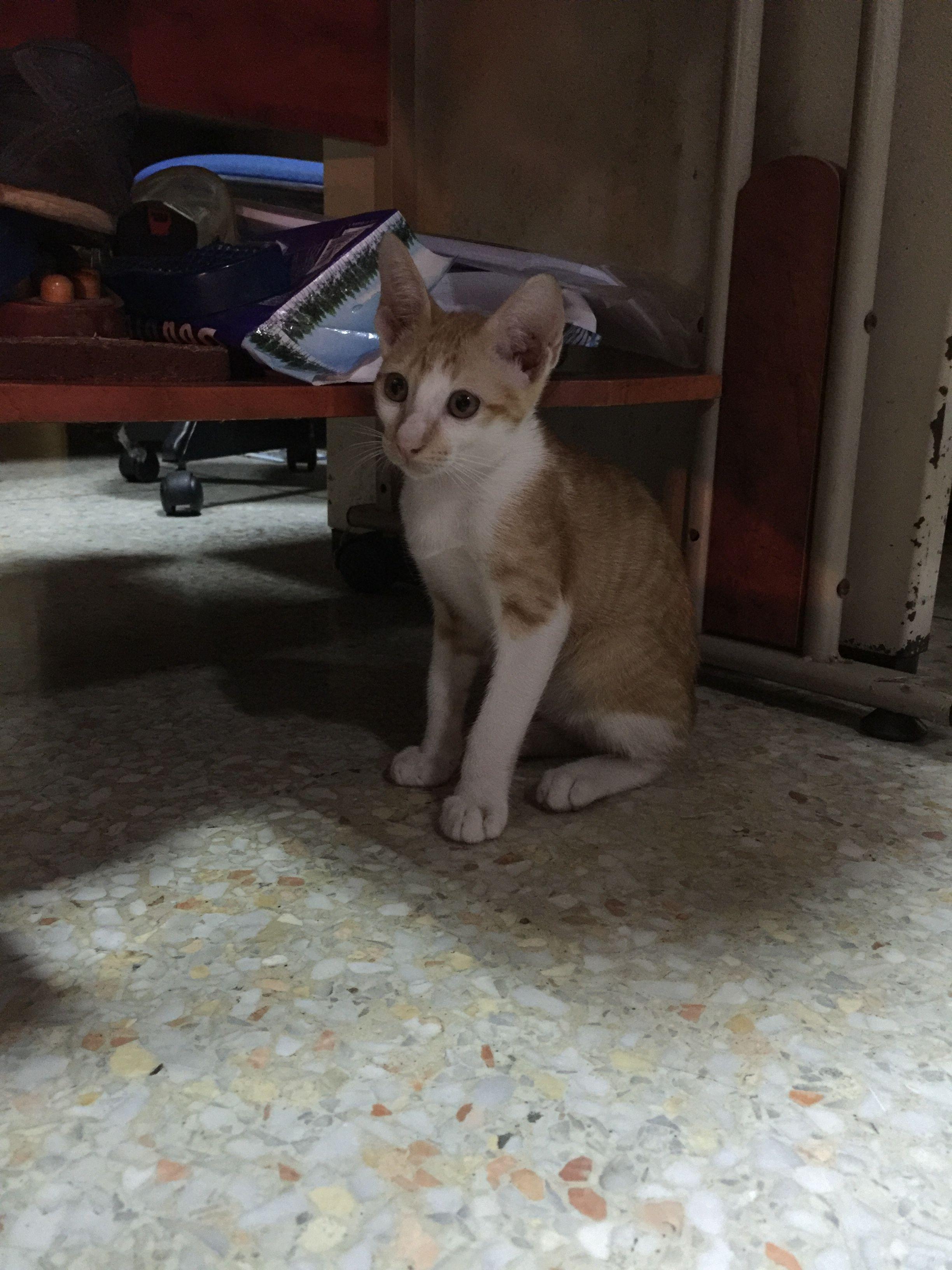 ป กพ นโดย Well Chanokkamon ใน Kitten