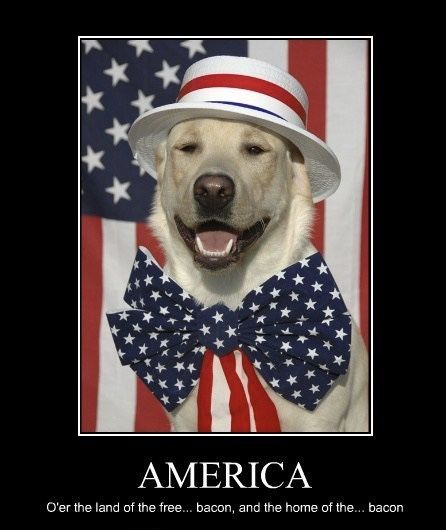 Funny Fourth Of July Quotes Photos Pinterest July Quotes