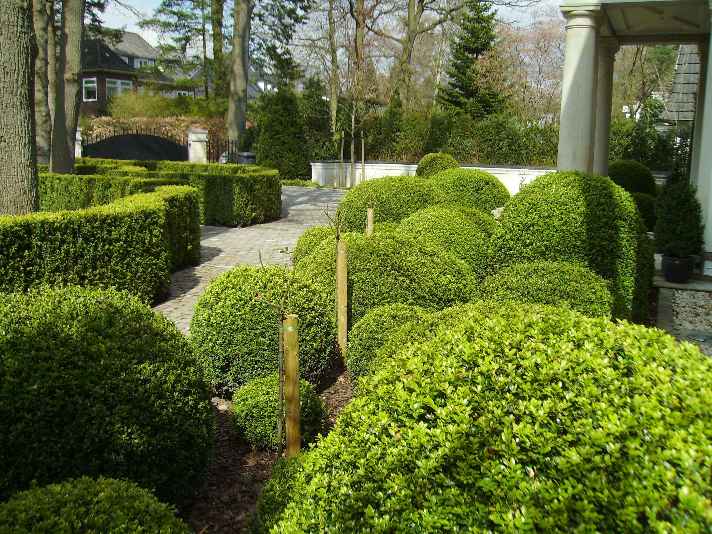 Vordergarten mit Buchsbaum