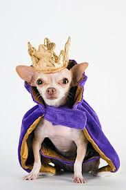 Chihuahua Is King Chihuahua Costume Top Male Dog Names Dog
