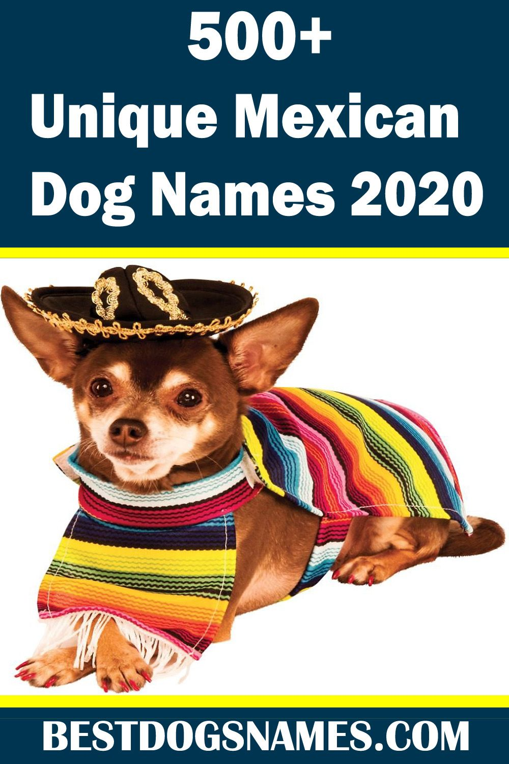 Looking For The Unique Mexican Dog Names Then Feel Welcome
