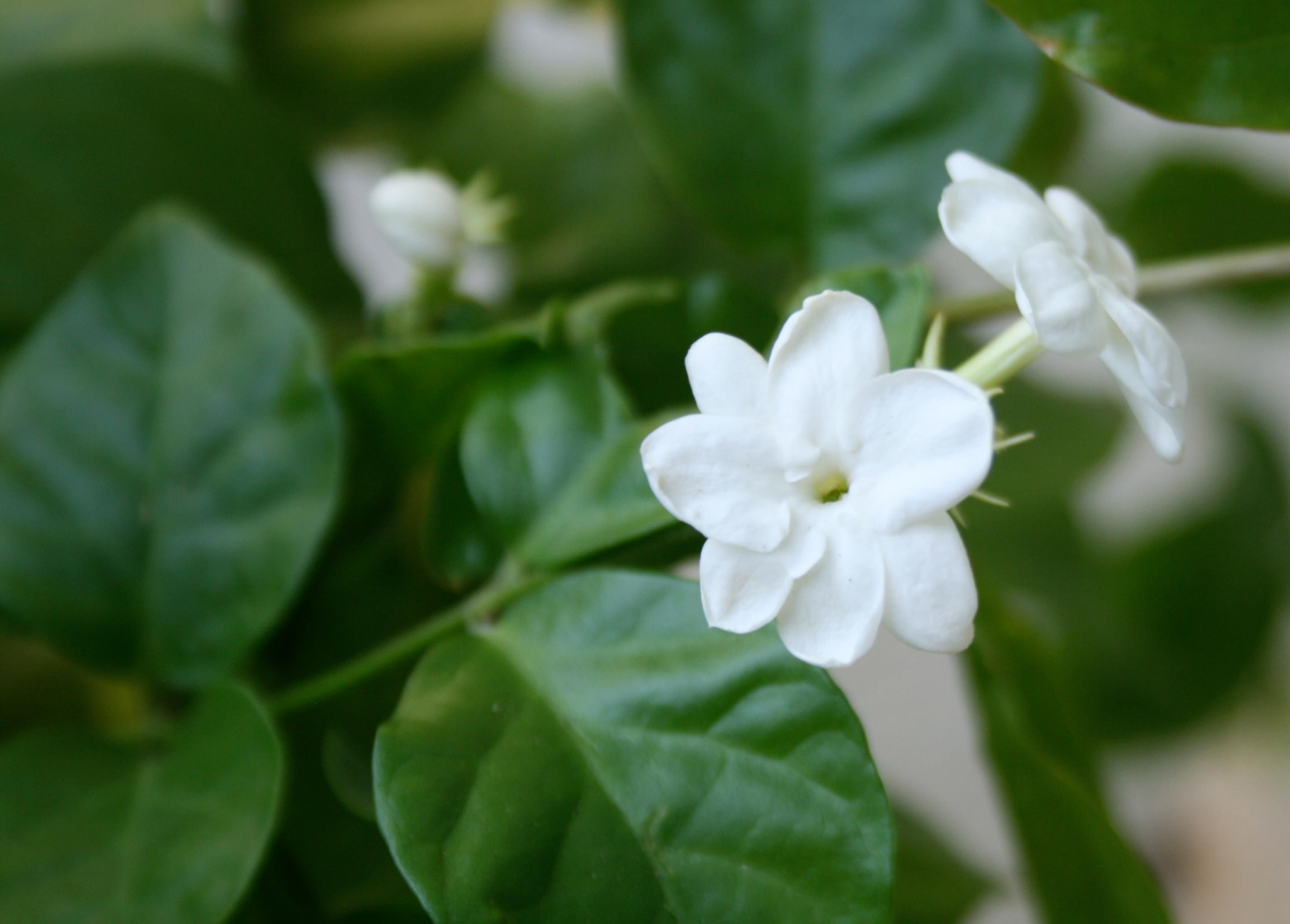 Survival Phrases in Tamil In the land of Jasmine flowers