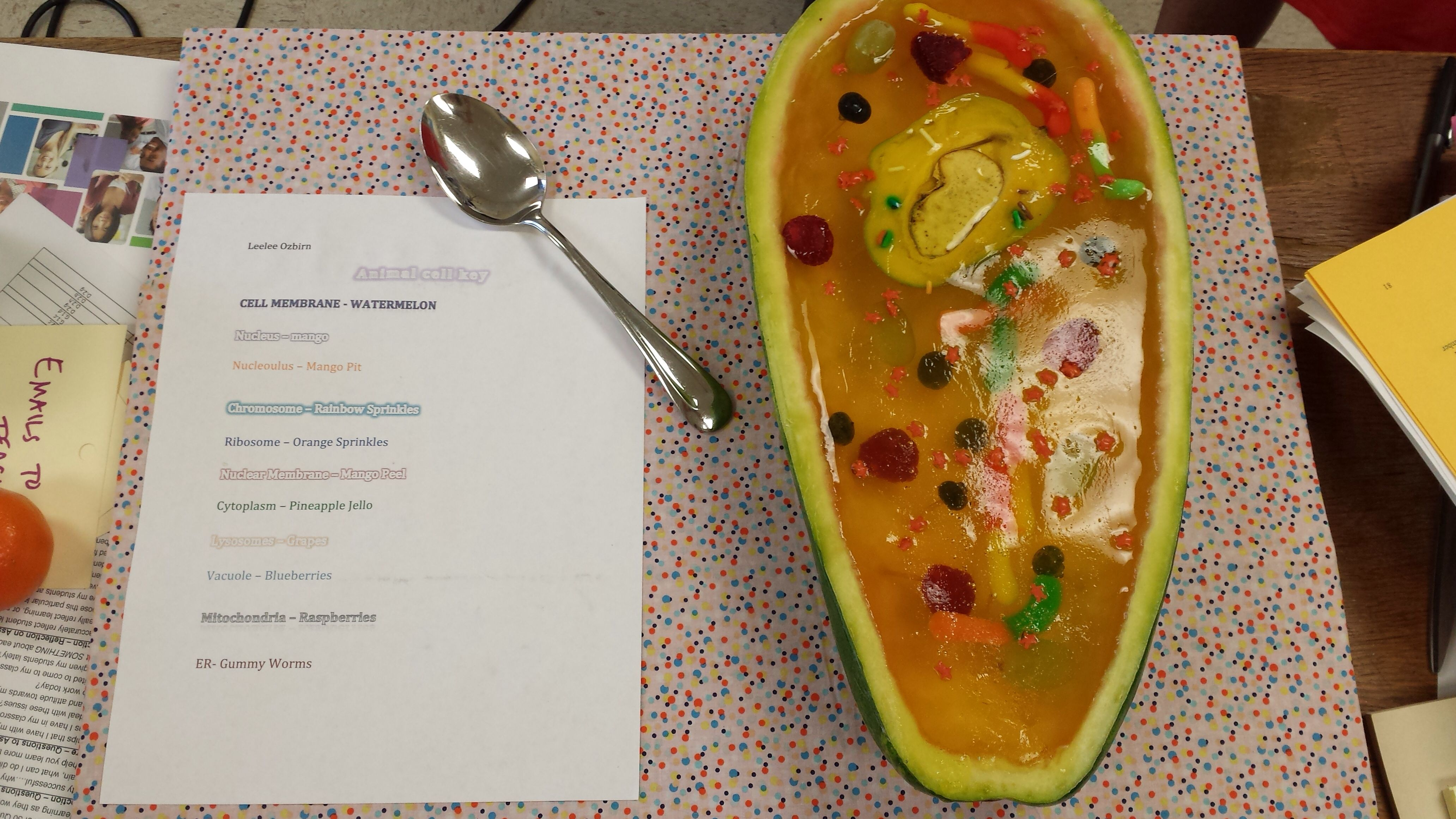 Animal Cell Model Watermelon Rind Jello Fruit And
