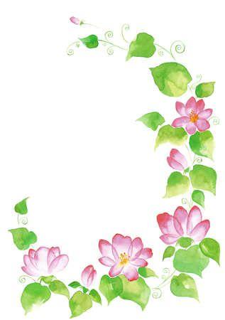 Pink climbing flowers