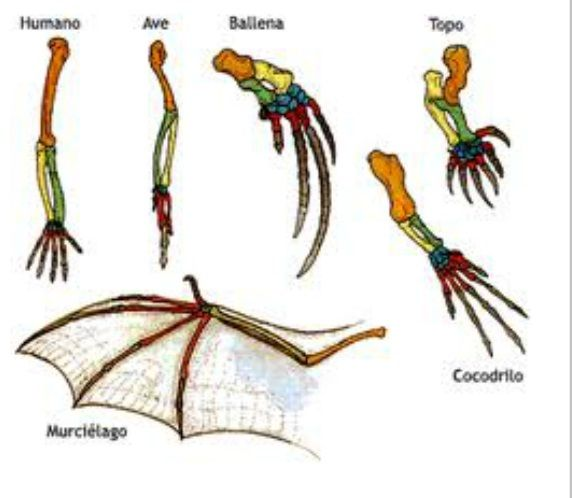 anatomia-comparada.jpg (572×498) | onto filo | Pinterest