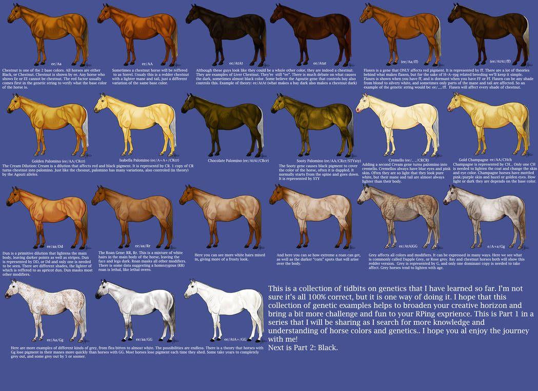 Chestnut Color Genetics Chart By Magicwindsstables Color Quiz Colorful Coat Horse Drawings [ 762 x 1049 Pixel ]
