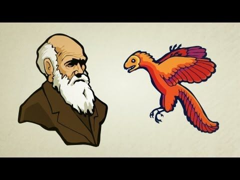 "▶ What is Evolution? - YouTube.  Love these animations from ""Stated Clearly"""