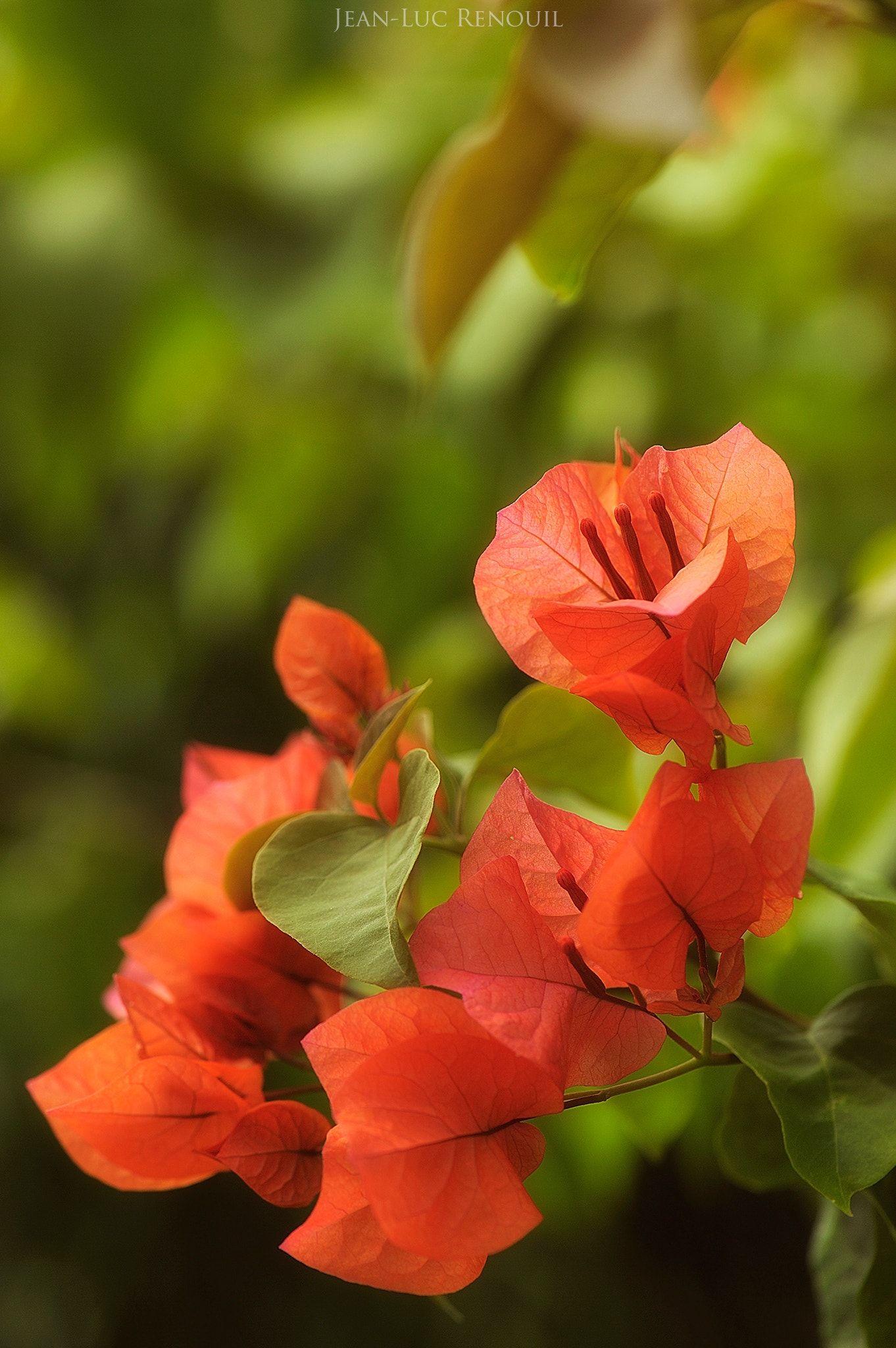Salékréolnull güller ve harika çiçekler roses and