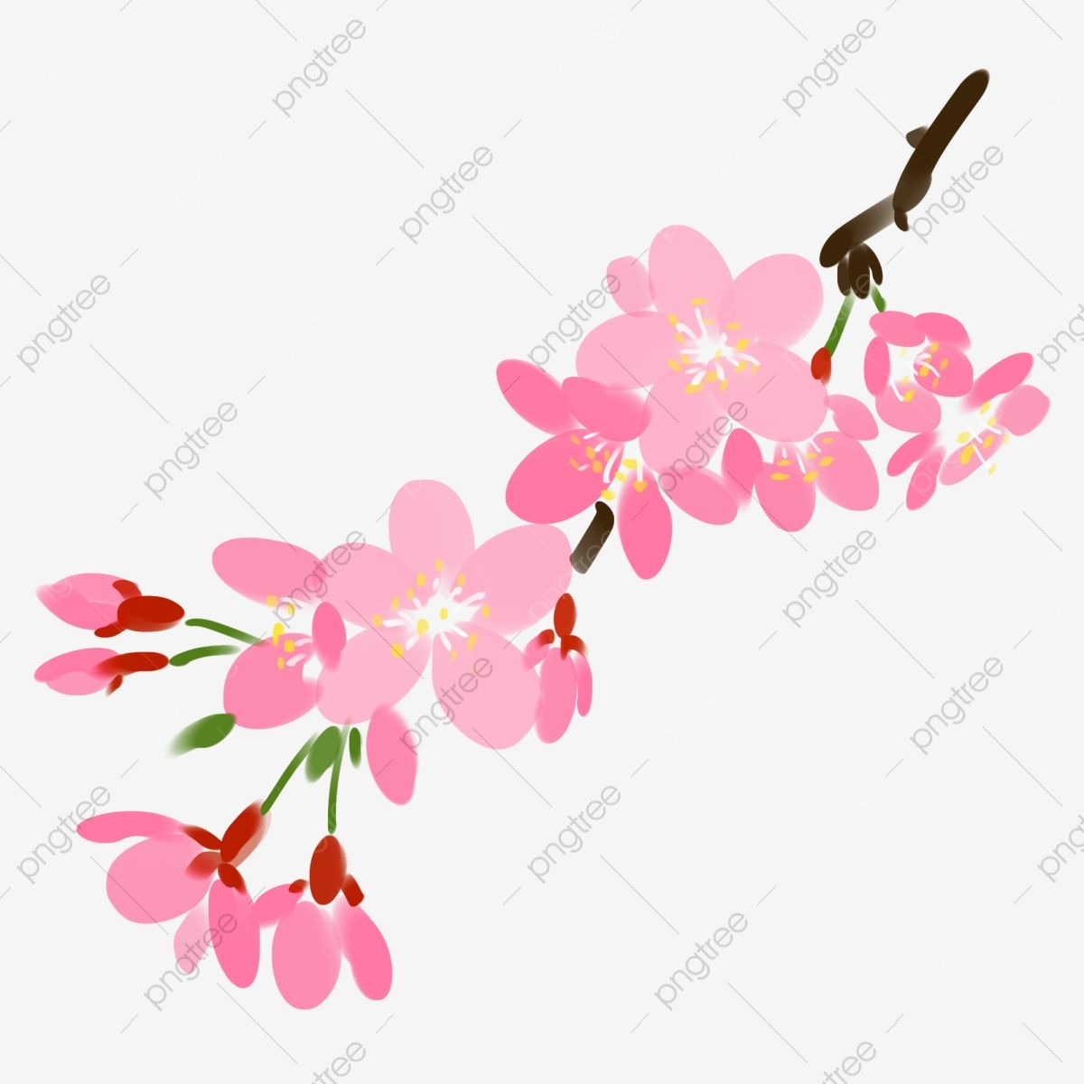 Pink Cherry Blossom Cherry Blossom Decoration Flowers Cherry Tree Cherry Blossom Clipart Branch Leaves Png Transparent Clipart Image And Psd File For Free Do Cherry Blossom Background Cherry Blossom Tree Tree