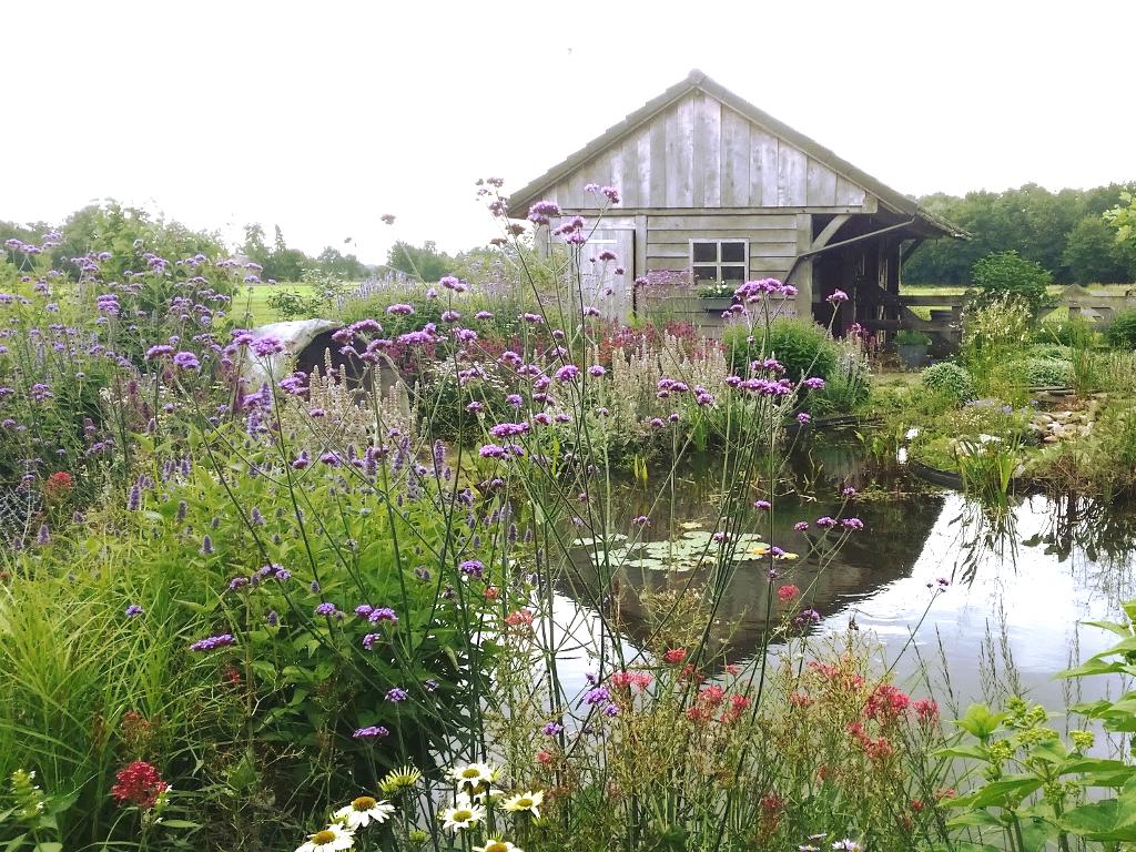 Natuurlijke vijver in landelijk tuin met wilde bloemen for Tuin en vijver