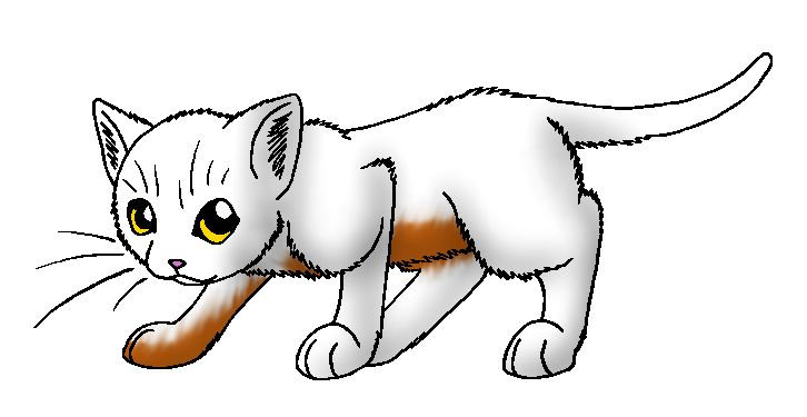 Cloud Kit Warriors Cat Coloring Page Anime Kitten