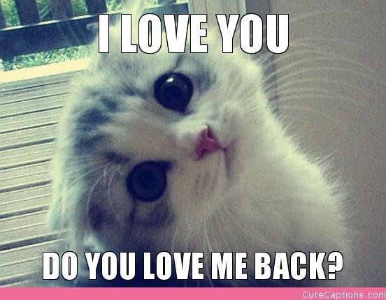 Love Me Meme Funny : I love you do you love me back cute captions cats kittens