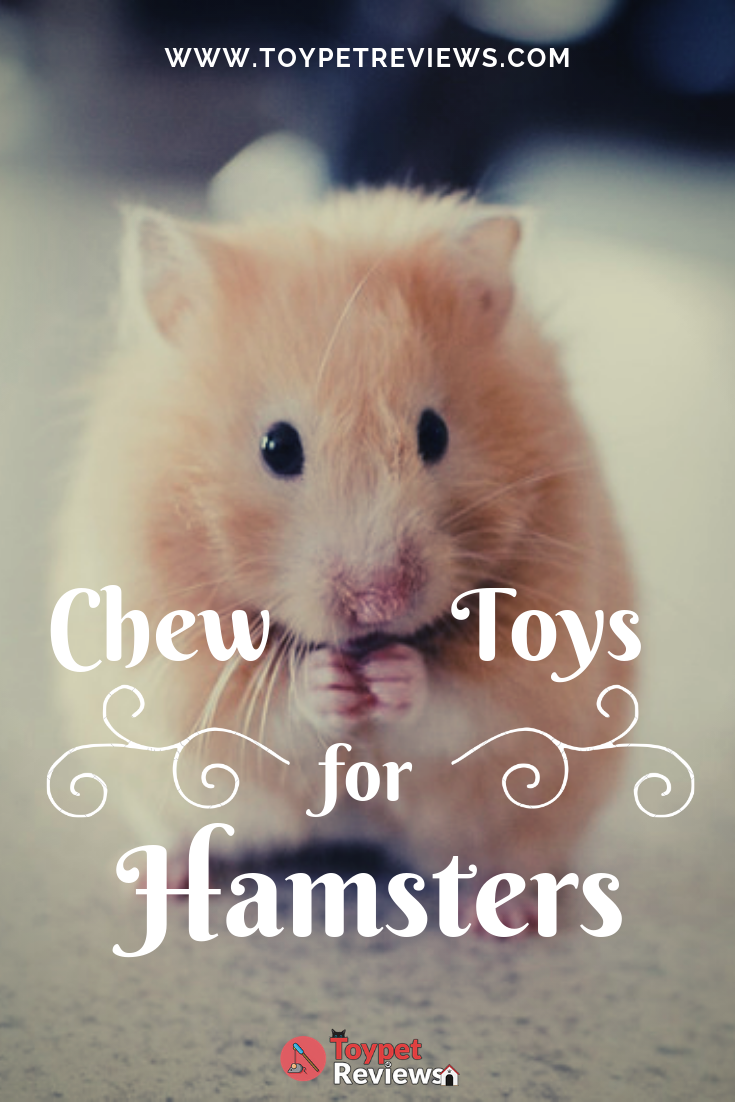 8 Best Chew Toys To Get For Your Hamsters With Images Hamster