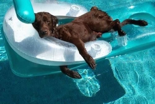 Lazy Dog Days in the Pool Pool Pets Pinterest