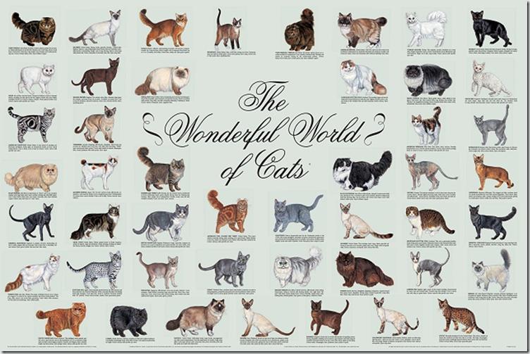 Wonderful World Of Cats Wonderful World Of Cats Cat Breeds Cat Breeds Chart Cat Breeds With Pictures
