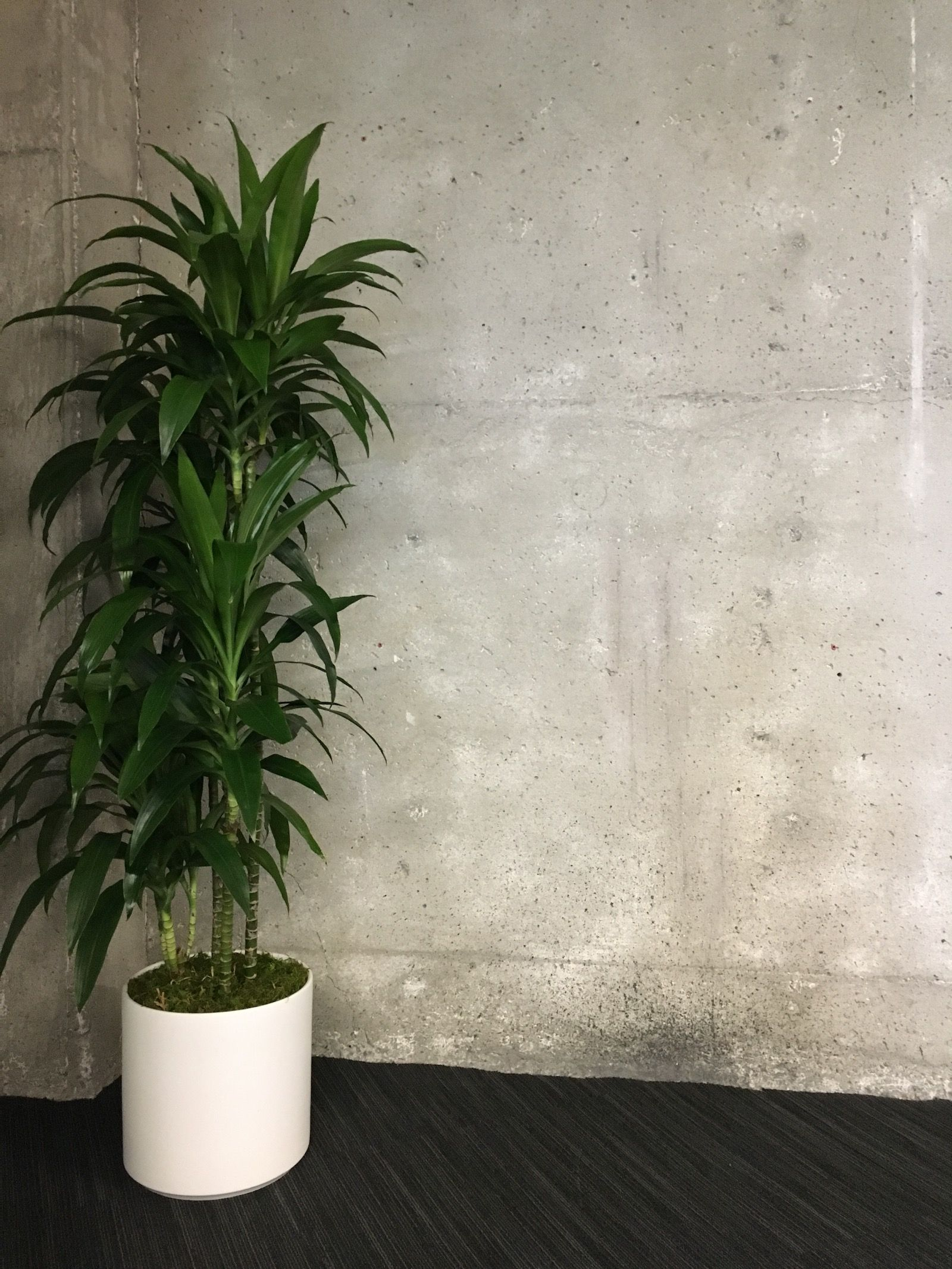 Office Greenery The Best Plants For Offices With No Sun La Residence Plant Care Tips And More Best Office Plants Plants Office Plants