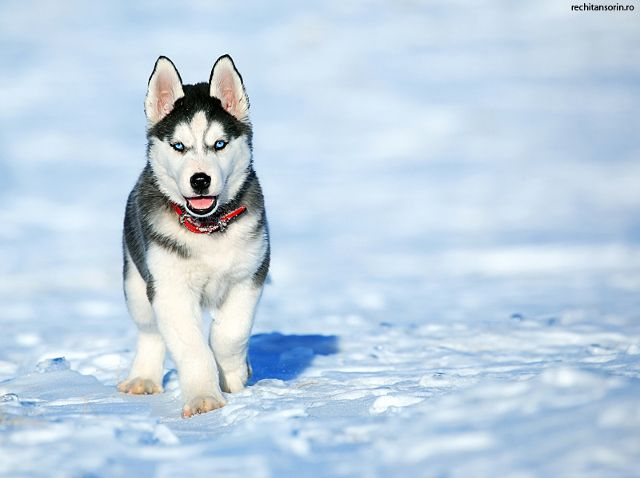 28 Beautiful Dog Pictures Cute Animals Beautiful Dogs Dogs