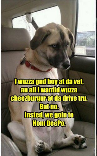 I Don T Want A New Dog House Funny Dog Pictures Funny Animal