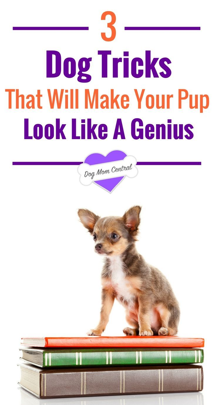 3 Tricks That Will Make Your Dog Look Like A Genius Dog Training