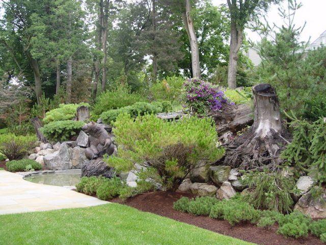 Arbre mort, bois flotté et souche d\'arbre pour décorer le jardin ...