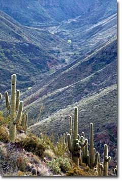 Badger Springs Trail Agua Fria National Monument Blm Arizona National Monuments Scenic Byway Viewing Wildlife