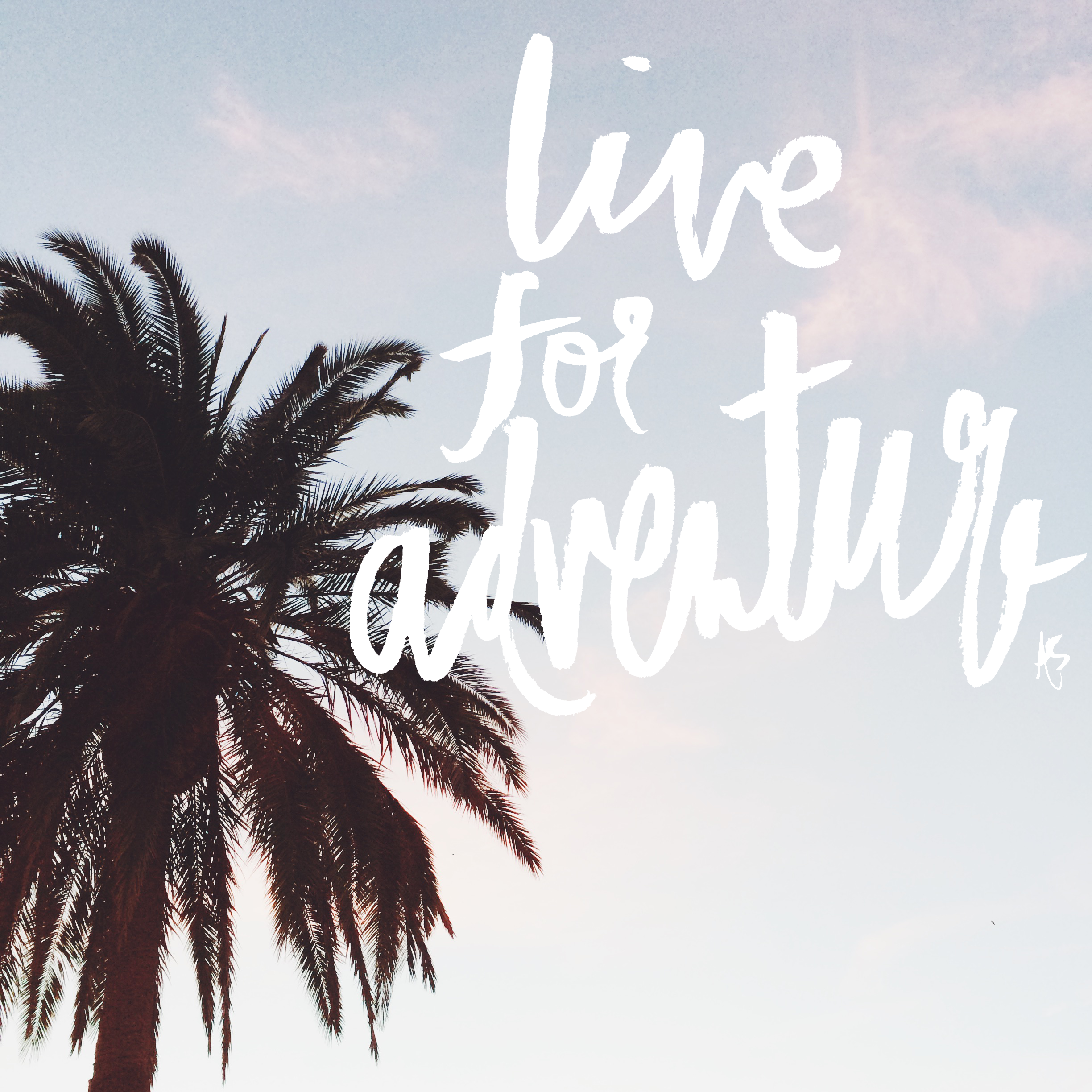 live for adventure palm tree anelise salvo words quotes travel quotes quotes